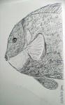 00127-Picturale-a-sketch-a-day-Jenny-v-Nkopie
